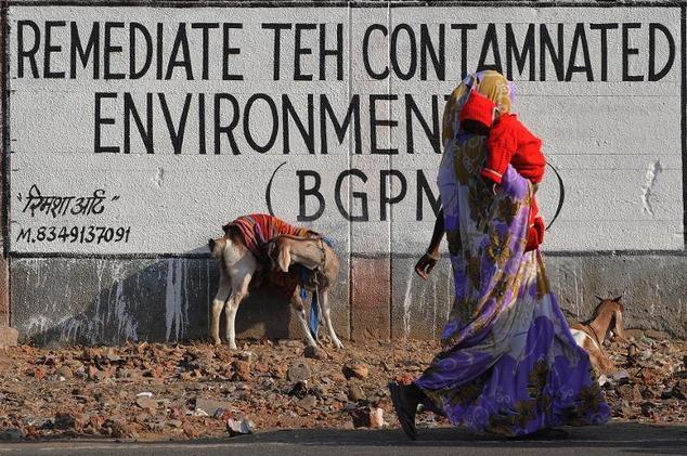 Bhopal Gas Tragedy Animals